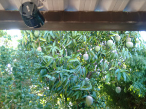 review of crow away, it doesnt work view, of mangos and speaker
